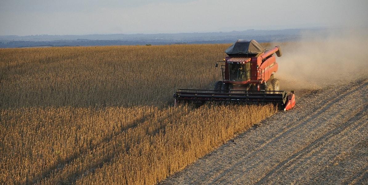 Veja como a safra de grãos pode impactar o câmbio