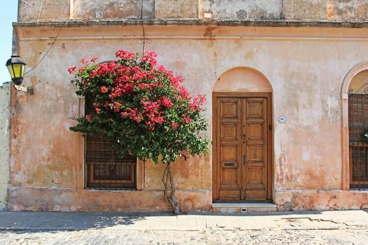 Destinos na América do Sul: Casa antiga com arvore de flores rosas em frente, localizada na Colônia Del Sacramento no Uruguai.