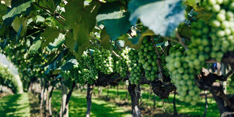 4-dicas-para-comprar-vinhos-de-Mendoza